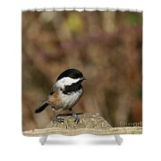 Chickadee On Wooden Fence Shower Curtain