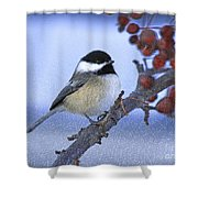 Chickadee With Craquelure Shower Curtain
