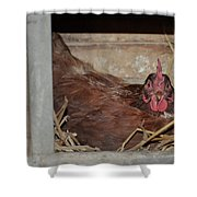 Chicken Box Shower Curtain