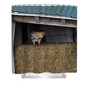 Chicken In Barn Shower Curtain