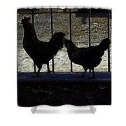 Chicken In Silhousette Shower Curtain