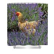 Chicken In The Lavender Shower Curtain