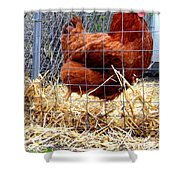 Chicken In The Straw Shower Curtain