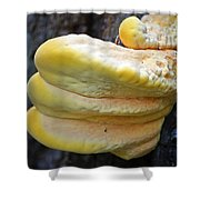 Chicken Of The Woods Shower Curtain