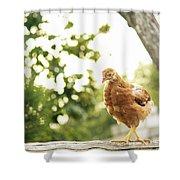 Chicken On Fence Shower Curtain