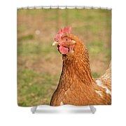 Chicken Strutting Shower Curtain
