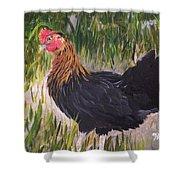 Chicken Study 1 Shower Curtain
