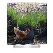 Chicken With Lavender  Shower Curtain