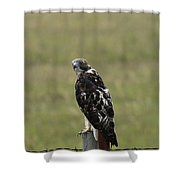 Chickenhawk Shower Curtain