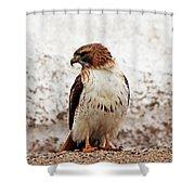 Chickenhawk Shower Curtain