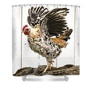 Chickens In Bird In Hand 2 Shower Curtain