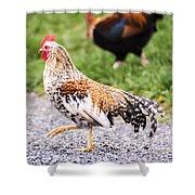 Chickens In Bird In Hand Shower Curtain