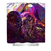 Chicks Hatched Fluffy Young Animal  Shower Curtain