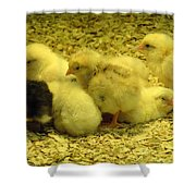 Chicks Shower Curtain