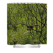 Chicky Shower Curtain