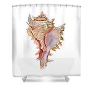 Chicoreus Ramosus Shell Shower Curtain