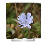 Chicory Blue Shower Curtain