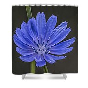 Chicory Flower Shower Curtain