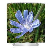 Chicory Shower Curtain