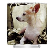 Chihuahua Chiqui Portrait 3 Shower Curtain
