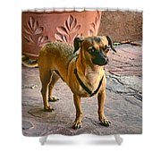 Chihuahua - Dogs Shower Curtain