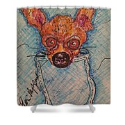 Chihuahua In A Pocket Shower Curtain