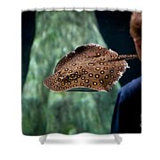 Child Watching Spotted Ray Fish Shower Curtain