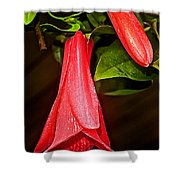 Chile's National Flower Copihue At Auto Museum In Moncopulli-chile  Shower Curtain