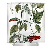 Chili Pepper, 1735 Shower Curtain