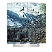 Chilkat River Eagles Shower Curtain