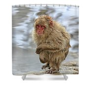 Chilled Shower Curtain