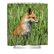 Chillin Vixen  Shower Curtain