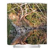 Chilling Iguana Shower Curtain