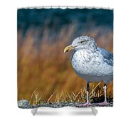 Chilling Seagull Shower Curtain