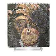 Chimp Shower Curtain