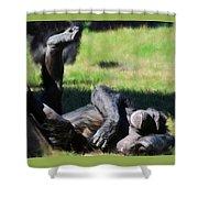 Chimp Sunbathing Shower Curtain