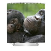 Chimpanzee Mother And Infant Shower Curtain