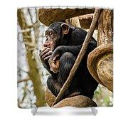 Chimpanzee, Nc Zoo Shower Curtain