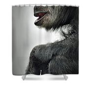 Chimpanzee Profile Vignetee Effect Shower Curtain