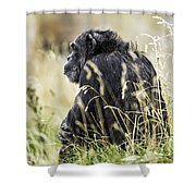Chimpanzee Sitting In The Grass Shower Curtain