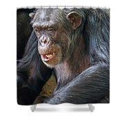 Chimpanzee Sitting Shower Curtain