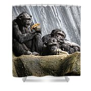 Chimpanzee Snacking On A Sunflower Shower Curtain