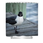 Chincoteague Island - Great Black-headed Gull Shower Curtain