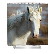 Chincoteague White Pony Shower Curtain