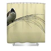 Chinese Bulbul Shower Curtain