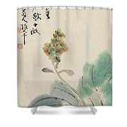 Chinese Cabbage Shower Curtain