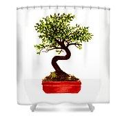Chinese Elm Bonsai Tree Shower Curtain