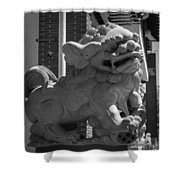 Chinese Guardian Male Lion B W Shower Curtain