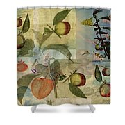Chinese Lantern Surrounded Shower Curtain