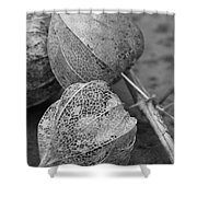 Chinese Lanterns In Black And White Shower Curtain